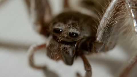 Grosby Shoes - Spider